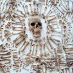 photo bones